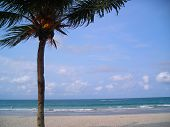 Single Coconut Tree With Copyspace