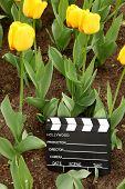 Junta de Claqueta Cine blanco y negro entre campo de tulipanes amarillos