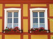 Windows With Geranium