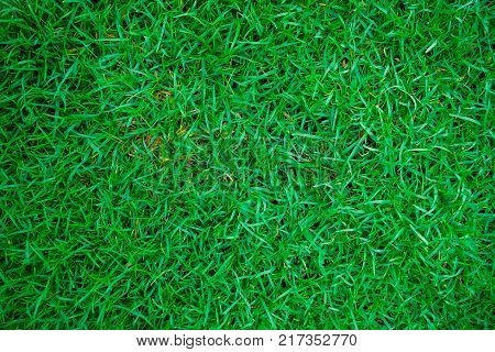 poster of Green fresh real grass in botany garden