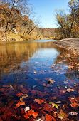 autumn leaves in the water in current river missouri