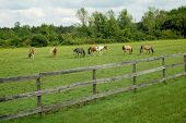 stock photo of stockade  - Horses grazing in an outdoor corral in summer - JPG