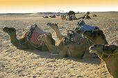 Sahara Desert 1