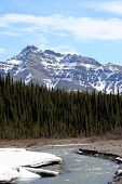 Denali National Park In Spring