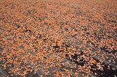 secagem sob o sol da aldeia de pesca de camarão