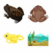 Vector Design Of Frog And Anuran Icon. Set Of Frog And Animal Stock Vector Illustration. poster