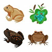 Isolated Object Of Frog And Anuran Sign. Collection Of Frog And Animal Vector Icon For Stock. poster