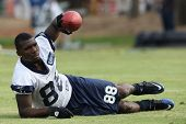 OXNARD, CA. - AUG 15: Dallas Cowboys WR (#88) Dez Bryant stretches with the team before the start of