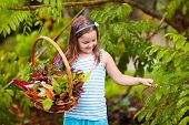 Child Picking Colorful Autumn Leaves In Basket. poster