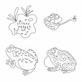 Vector Illustration Of Amphibian And Animal Icon. Collection Of Amphibian And Nature Vector Icon For poster