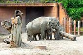 Beautiful Elephants In The Zoo. Animal Copenhagen Zoo. poster