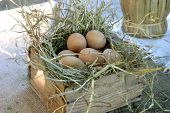 stock photo of pack-rat  - wood box with eggs inside - JPG