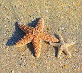 Starfish and sea wave on sandy tropical beach