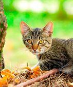 Постер, плакат: Домашняя кошка в саду