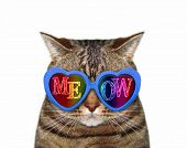 The Funny Cat Wears Blue Sunglasses With Inscription Meow. White Background. Isolated. poster