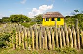 Fence of cactus on the island in the Caribbean
