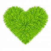 Green grass heart. Vector. 10eps