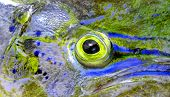 picture of mahi  - close up of eye of mahi mahi or dolphin fish - JPG