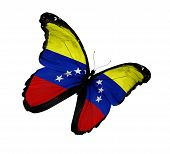 Venezuelan Flag Butterfly Flying, Isolated On White Background