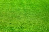 Grass Always Greener