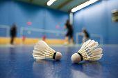 pic of game-cock  - badminton  - JPG