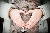 Baum-Liebhaber