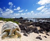 picture of turtle shell  - Large turtle  - JPG