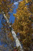 Fall Foliage Perspective