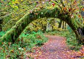 Green Moss And Autumn Leaves Covered Arc