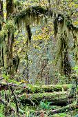 Moss Hanging From Trees
