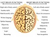 Brain hemisphere functions