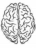 Brain contours