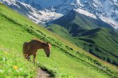 three horse in high mountains