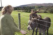 Tourist At A Farm Feeding Donkeys