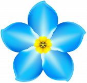 Flower Forget-me-not
