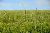 stock photo of hayfield  - Close up of long grass in countryside.