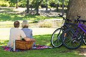 Rear view of couple with picnic basket in park