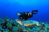 stock photo of hawksbill turtle  - Scuba Diver and Sea Turtle - JPG