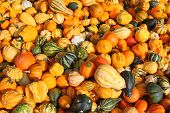 image of gourds  - Background photo of fresh gourds - JPG
