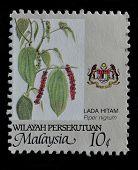 Malaysia Postage Stamp Printed In Malaysia Shows Lada Hitam (piper Nigrum) Herb