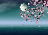 picture of night-blooming  - Pink cherry blossom sakura branch at night time - JPG