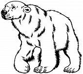 polar bear black white