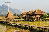 Resort Vang Vieng, Laos, areas of green rice fields
