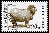 Postage Stamp Bulgaria 1992 Sheep, Farm Animal
