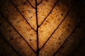 Macro of dried leaf grunge as background