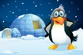 foto of igloo  - Illustration of a penguin standing near the igloo - JPG