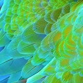 image of harlequin  - Colorful feathers Harlequin Macaw feathers background texture