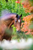 Brown horse portrait on colorful nature background