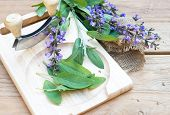 Fresh Sage Leaves And Blossoms On Wooden Cutting Board