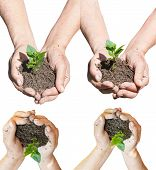 Set Of Peasant Hands With Soil And Green Sprout
